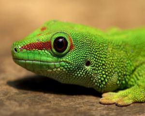 photo of a green lizard