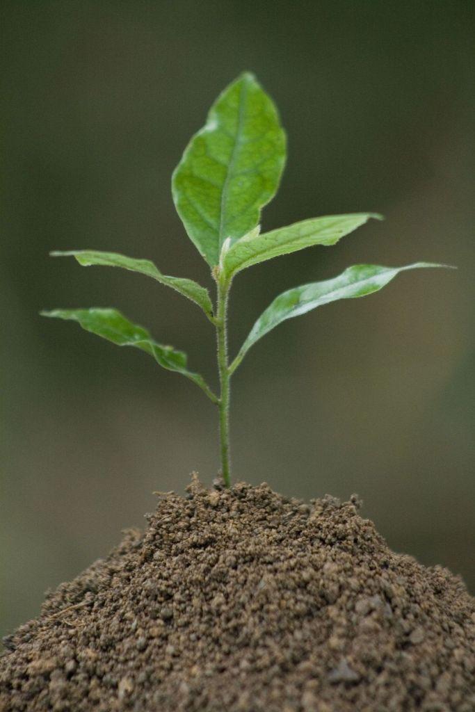Baby plant